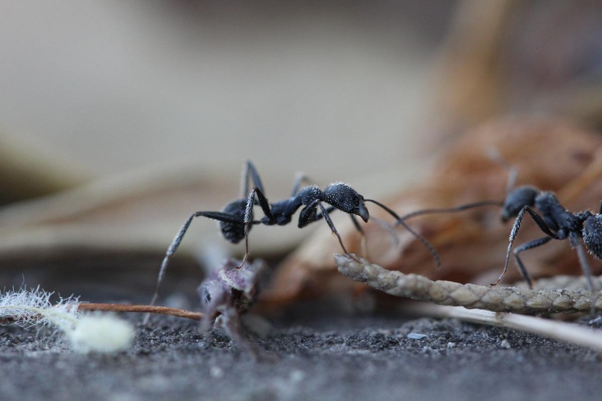 El ego de las hormigas y otros cuentos