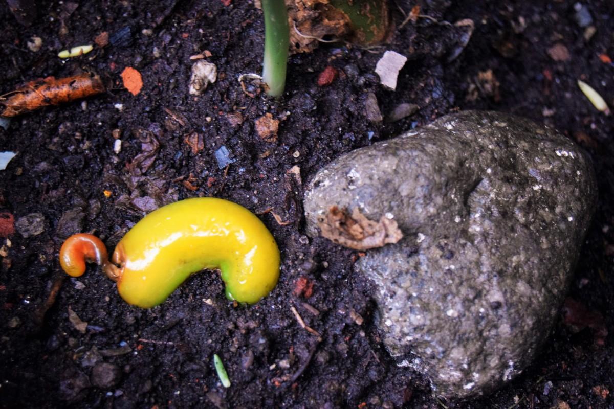 El chile y la piedra