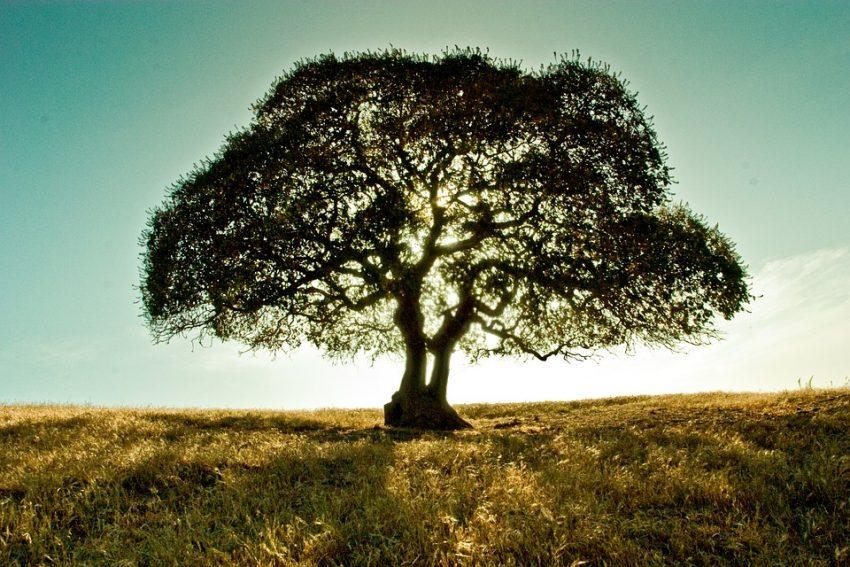 tree-696839_960_720